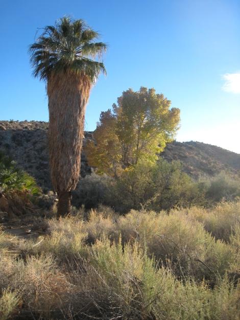 natural_desert