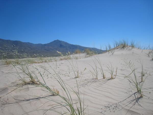 natural_dune